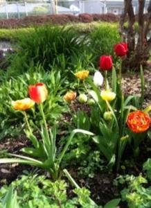 Lifetime Learning Flower Garden, mulitcolours